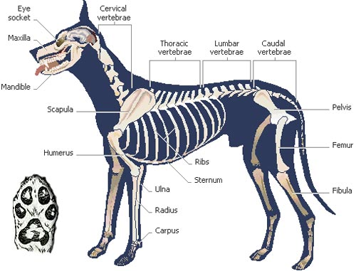 mary rose dog was a he  not a she
