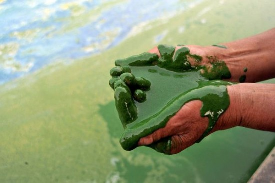 algae-pollution-lake-china_9602_600x450