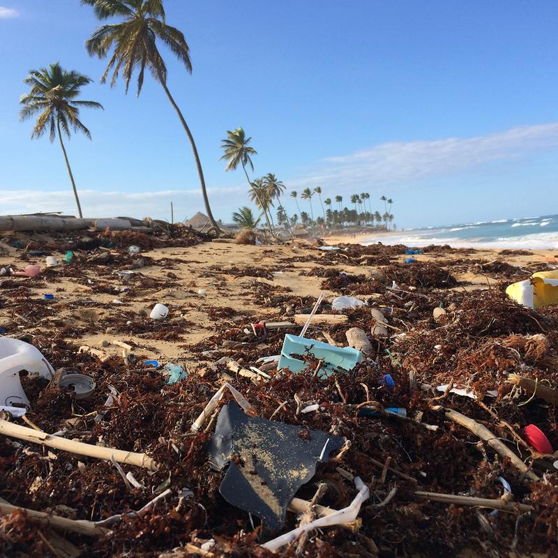 Every year, trillions of single-use plastic products are consumed and thrown away - often ending up on the beaches and in the oceans harming marine life.